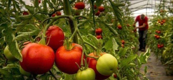 Garantizada la producción de alimentos durante periodo de contigencia