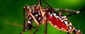 Registran 21 casos de dengue en el estado