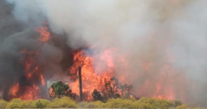 Incendios forestales dañan  más de 10 mil hectáreas en el estado: Medio Ambiente