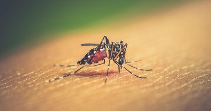 Salud llama a prevenir el dengue durante la pandemia