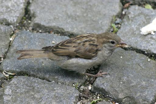 Entrega Medio Ambiente manual para control de poblaciones de aves
