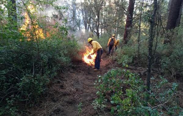 Disminuye más 43% la cantidad de hectáreas dañadas por incendios forestales