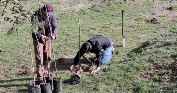 Secretaría de Medio Ambiente entrega 3 mil 883 árboles para reforestar parques