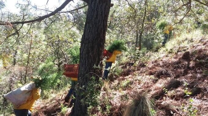 Medio Ambiente planta 2 mil árboles en Tlachichuca para recuperar zona forestal