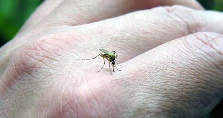 87% de los casos de dengue en Puebla no son graves: Salud