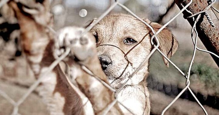 Hasta 10 años de cárcel por maltrato animal en Puebla