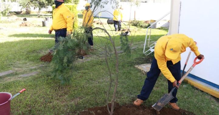 Mediante jornadas de reforestación se han plantado 22 mil 637 árboles