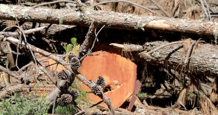 Promoverán acciones de recuperación forestal en Ahuazotepec