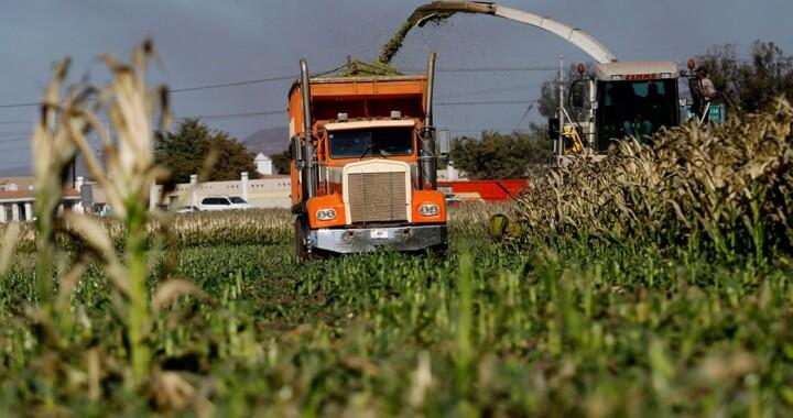 Policía Estatal de Vialidad no podrá infraccionar vehículos que transporten productos del campo