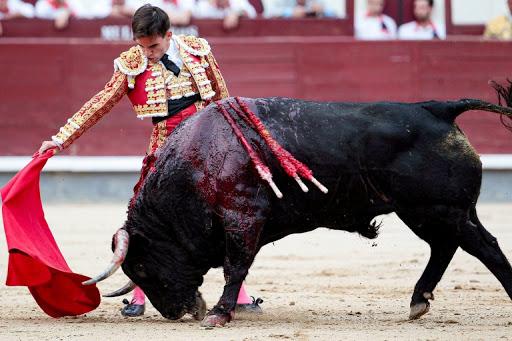 Claudia Rivera lanza propuesta para prohibir corridas de toros
