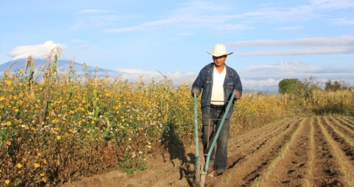 El trabajo del futuro está en el campo: Cuéllar Delgado