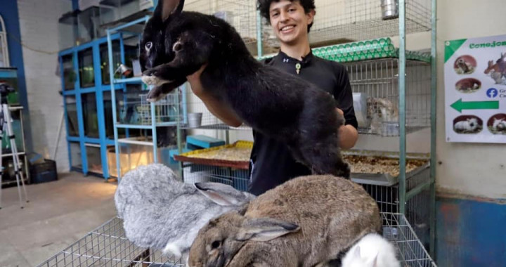Estudiante de la BUAP cría los conejos más grandes del mundo en Puebla