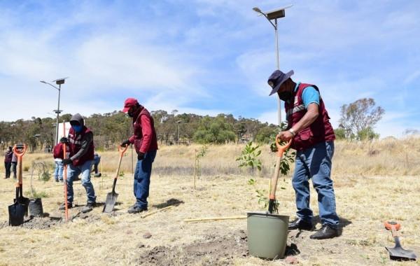 Sembrarán más de 31 mil árboles para mitigar efectos del cambio climático