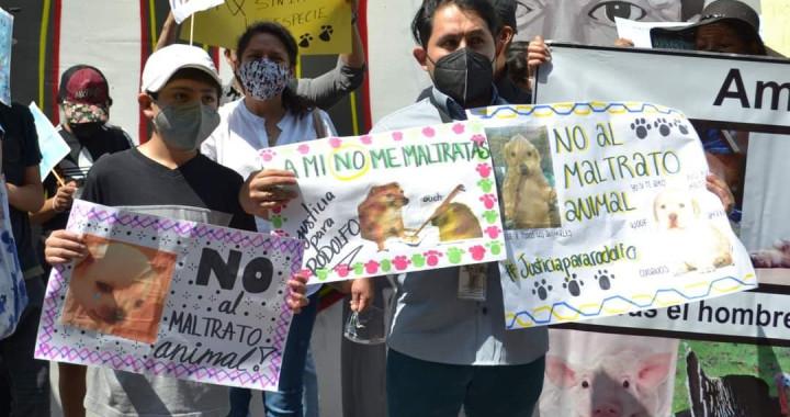Realizan marcha en Puebla para exigir un alto a la crueldad animal