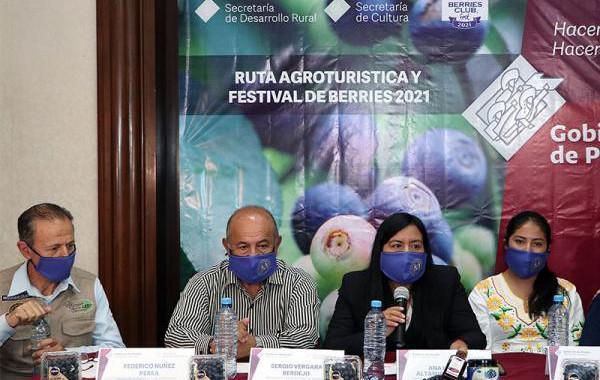 Impulsará SDR el cultivo de blueberry