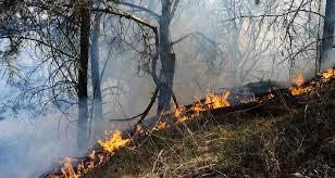 Acumula 301 incendios forestales en 5 meses y 7 mil 400 hectáreas dañadas en Puebla