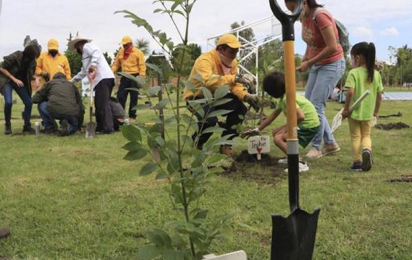 Medio Ambiente reforesta parques de la ciudad con 317 árboles