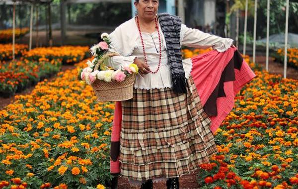 SDR promueve consumo de cempasúchil para temporada de Día de Muertos